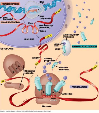afvallen met eiwitdieet
